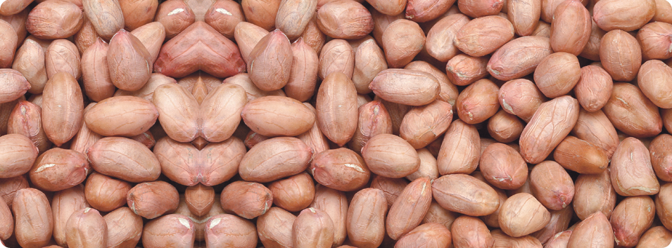 Java peanuts from India Bold peanuts from India