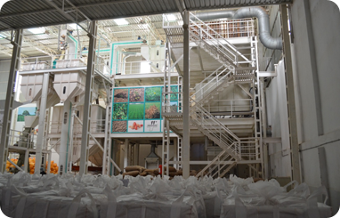 Peanut Processing unit for coated peanuts